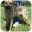 Photo 1 - German Shepherd Dog Mix Puppy for adoption in North Judson, Indiana - Bo