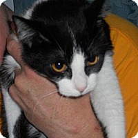 Adopt A Pet :: Melody - Sterling Hgts, MI