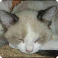 Adopt A Pet :: Fava - Scottsdale, AZ