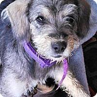 Adopt A Pet :: Gracie - Vidor, TX
