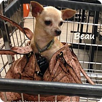 Adopt A Pet :: Beau - New Orleans, LA