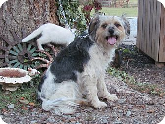 Terrier (Unknown Type, Medium) Mix Dog for adoption in Bedminster, New Jersey - DHARMA
