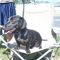 Adopt A Pet :: Bruno - Ogden, UT