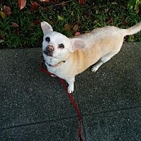 Adopt A Pet :: PIXIE - Pt. Richmond, CA