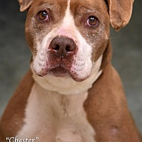 Adopt A Pet :: Chester - Newnan City, GA