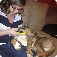 Adopt A Pet :: Abu - Knoxville, TN