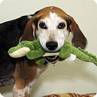 Adopt A Pet :: Eeyore - Richmond, VA