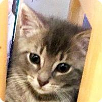 Adopt A Pet :: Pickles - Walworth, NY