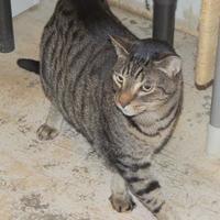 Adopt A Pet :: Max - Westville, IN