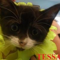 Adopt A Pet :: TESSA - Franklin, NC