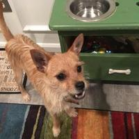 Adopt A Pet :: Skip (formerly Chip) - Baltimore, MD