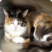 Adopt A Pet :: Pumpkin - Indiana, PA