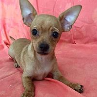 Adopt A Pet :: Luana - Santa Ana, CA