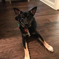 Adopt A Pet :: Max - Greeneville, TN