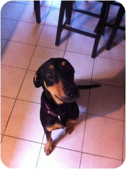 Hound (Unknown Type)/Coonhound (Unknown Type) Mix Dog for adoption in Baton Rouge, Louisiana - Don Juan