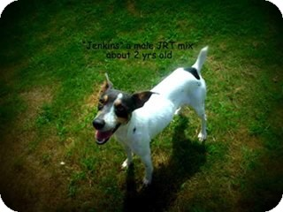 Jack Russell Terrier Mix Dog for adoption in Gadsden, Alabama - Jenkins