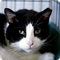 Adopt A Pet :: Wade - Chicago, IL