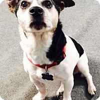 Adopt A Pet :: Eddie - Oberlin, OH