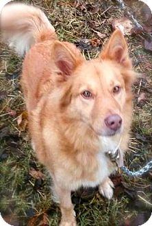 Shepherd (Unknown Type)/Terrier (Unknown Type, Medium) Mix Dog for adoption in Princeton, Kentucky - Stevie