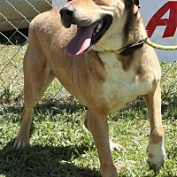 Bull Terrier Mix Dog for adoption in Grayson, Louisiana - Sadie