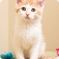 Adopt A Pet :: Sketch - Chicago, IL