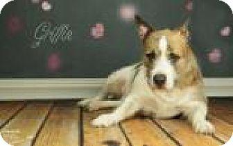 Terrier (Unknown Type, Medium) Mix Dog for adoption in Janesville, Wisconsin - Griffin