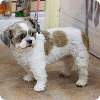 Adopt A Pet :: Charlotte - Rigaud, QC
