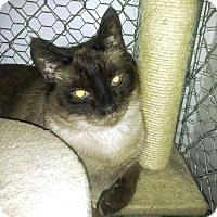 Adopt A Pet :: Sammy - Palo Cedro, CA