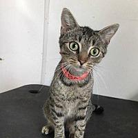 Adopt A Pet :: Marissa - Waycross, GA