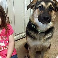 Adopt A Pet :: Finley - Harrisonburg, VA