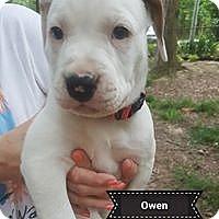 Adopt A Pet :: Owen - Hagerstown, MD