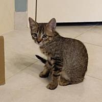 Adopt A Pet :: Hunter - Santa Fe, TX