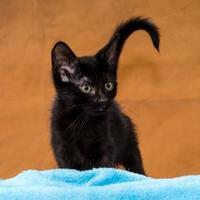 Adopt A Pet :: Preacher - Chesapeake, VA
