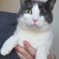 Adopt A Pet :: Cinderella - Menomonie, WI