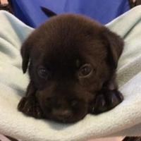 Adopt A Pet :: Parrish - Portage, WI