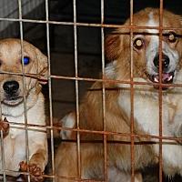 Adopt A Pet :: Arabella - Salem, WV