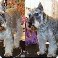 Adopt A Pet :: Minnie - Southeastern, KS