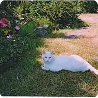 Adopt A Pet :: Walter - Duncan, BC