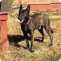 Adopt A Pet :: Butch in NC - Jamestown, CA