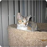 Adopt A Pet :: Shirley - Catasauqua, PA