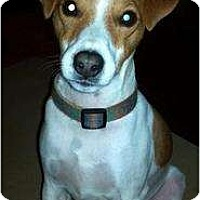 Adopt A Pet :: Dash in Shreveport - Houston, TX
