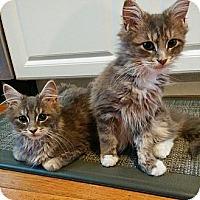 Adopt A Pet :: Trickster - Bedford, MA