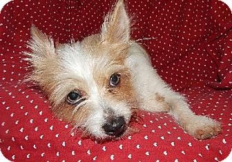 Terrier (Unknown Type, Medium) Mix Dog for adoption in Old Fort, North Carolina - Wendy
