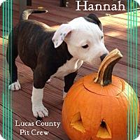 Adopt A Pet :: Hannah - Toledo, OH