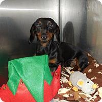 Adopt A Pet :: St. Nick - Shawnee Mission, KS