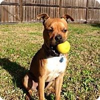 Adopt A Pet :: Rigley - Sugar Land, TX