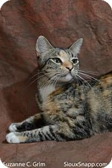 Calico Cat for adoption in New Orleans, Louisiana - Melody