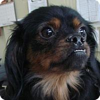 Adopt A Pet :: Lilo - Erwin, TN