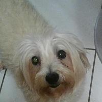 Adopt A Pet :: Asia - Fort Lauderdale, FL