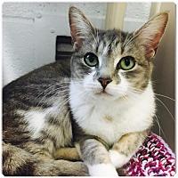 Adopt A Pet :: Gracie - Sanford, NC